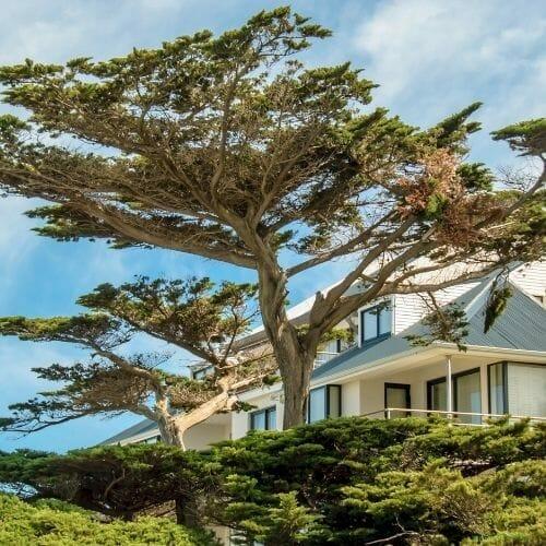 big-tree-house-company-removal