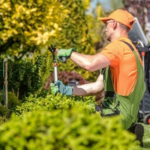man-orange-tree-pruning-services-west-austin