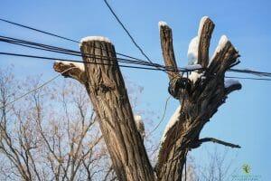 cabling-bracing-tree-service-austin