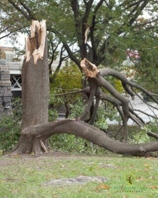 emergency-tree-removal-company-austin
