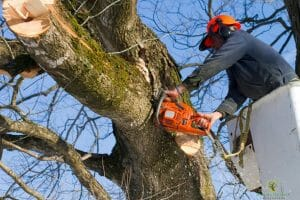 man cutting tree austin