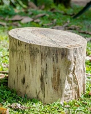 stump-grinding-removal-company