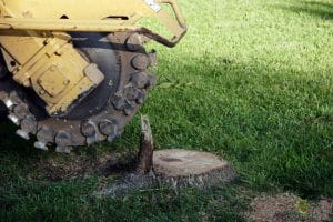 stump-removal-company-austin
