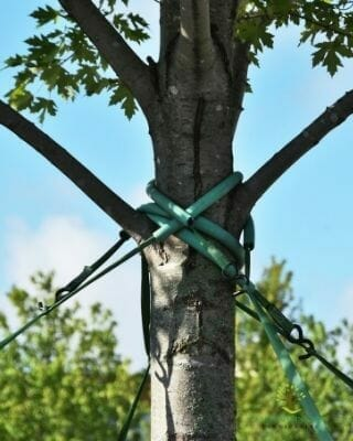 tree-cabling-service-tx