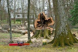 tree-removal-austin