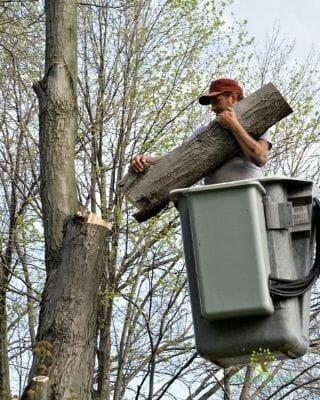 tree-removal-company-austin-tx