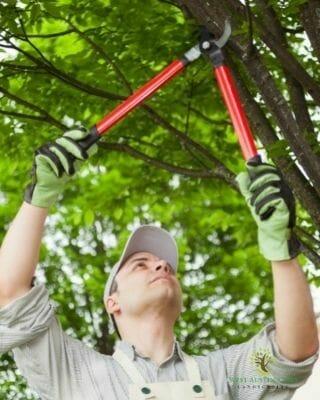 tree-trimming-austin